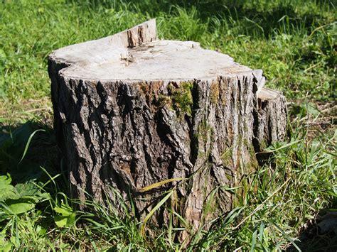 tree stump why tree stump removal is important tree
