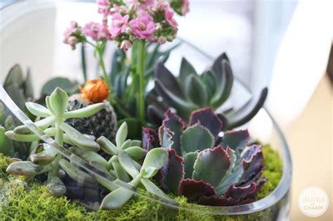 piante grasse in vaso di vetro realizzare composizioni di piante grasse le piante