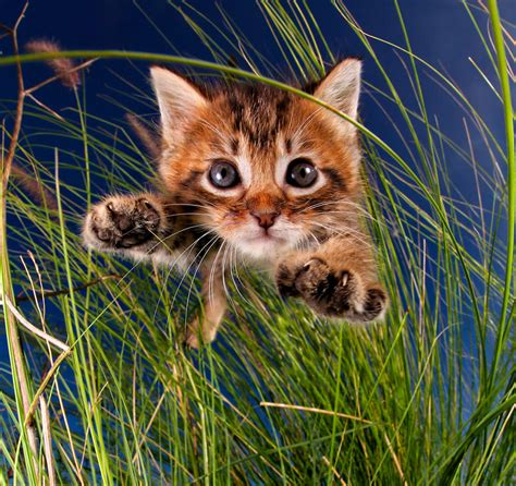 with cats 31 stretches inspired by cats books rescue kittens in mid pounce 11 pics bored panda