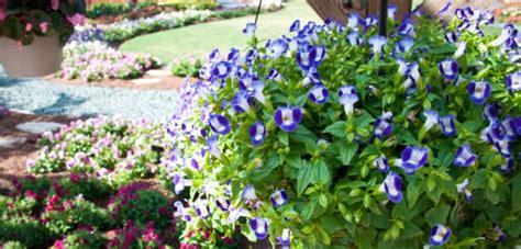 How To Design Backyard Landscaping Backyard Garden With Blue Torenia Plants Beautiful