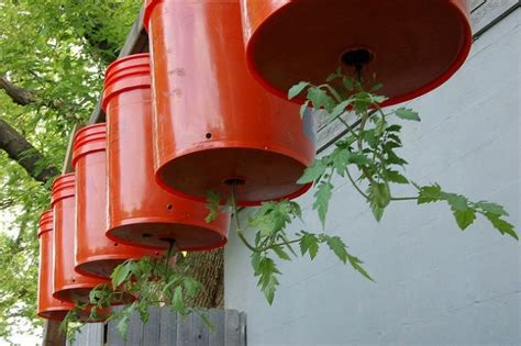 Diy Hanging Tomato Planter by Tomato Plants Gardening