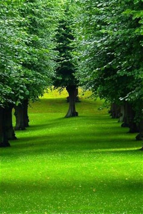 Green Wallpaper For Eye Relaxation | eye care wallpapers amazing backgrounds to relax your