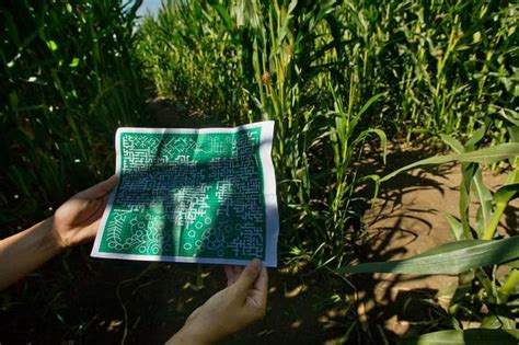 dixons landmark corn maze  worlds largest