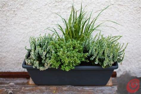 piante da davanzale oltre 25 fantastiche idee su fioriere per davanzale su