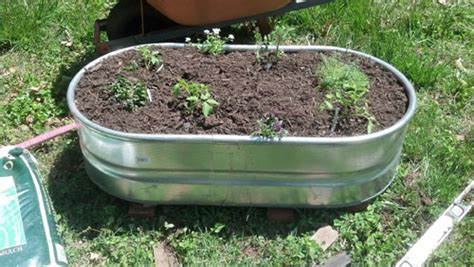 stock tank vegetable gardening easy summer gardening ideas containers and edibles