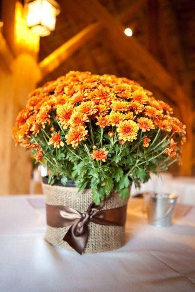 magnificent ideas  potted mums southern living