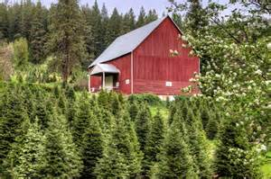 south carolina christmas trees find sc christmas tree