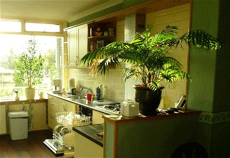 green kitchen decorating ideas how to decorate kitchen with green indoor plants and save
