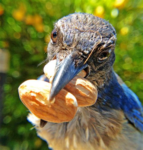 a guide to feeding birds with peanuts backyard chirper blog