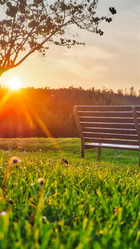 bench park sunlight summer wallpaper background