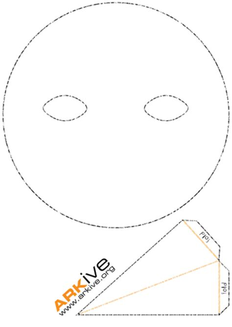mask template pdf penguin diversity mask by arkive teaching