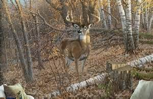 deer wall mural deer wall murals outdoor gear pinterest