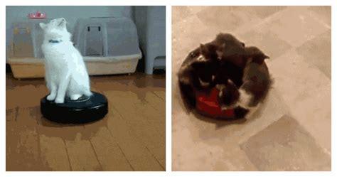 Cat On Magic Carpet Video   Carpet Vidalondon