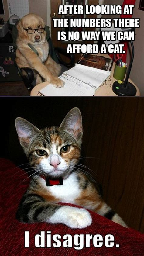 cat vs meme best 50 cat vs memes images to prove who s quotations and quotes