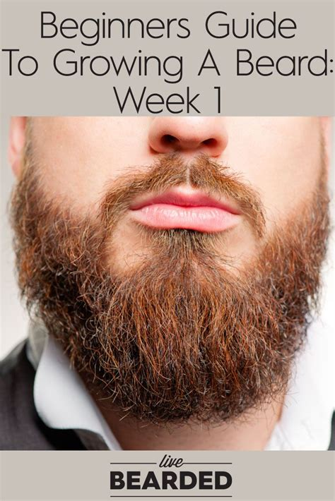 a beginners guide to growing an african american child s 182 best ideas about the beard factor on pinterest full