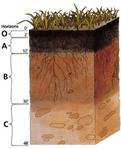 A Red Colored Root Vegetable - pacess 3 4 the soil system