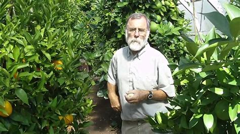 cherry tree investments v landmain 2012 bob duncan growing oranges in canada