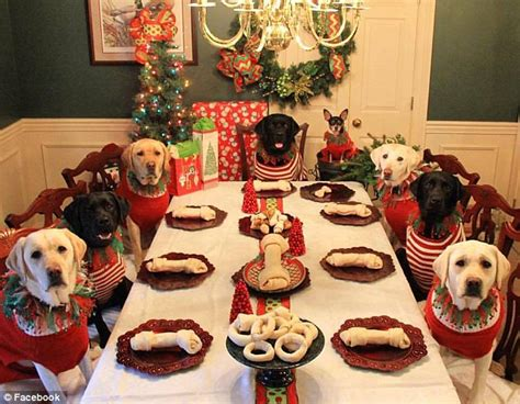 Dogs At Dinner Table by Animal Loving Family Dresses Up Their Eight Pups In Festive Sweaters Daily Mail