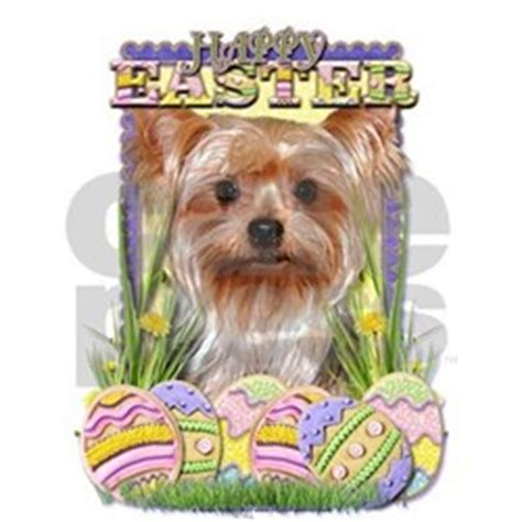 yorkie height terrier greeting cards breeds picture