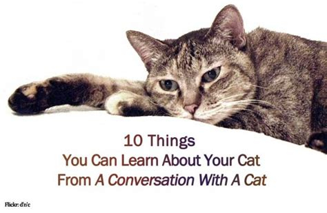 10 Things Can Learn From by 10 Things You Can Learn About Your Cat From A Conversation
