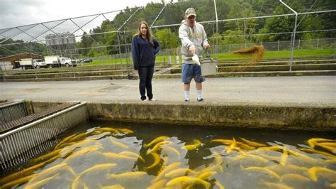pa fish and boat commission hatcheries centre county fish hatcheries provide education ecology