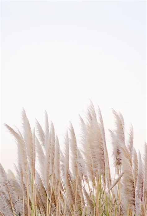 creamy neutral field minimalist photography aesthetic