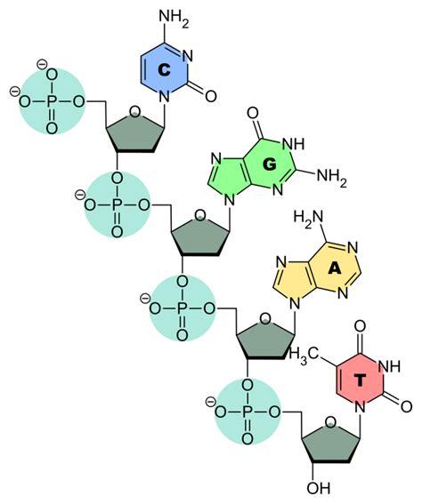 idrogeno tavola periodica il carbonio l idrogeno e la tavola periodica