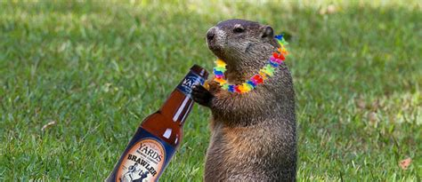 groundhog day drink punxsutawney phil prepping for his prediction this coming