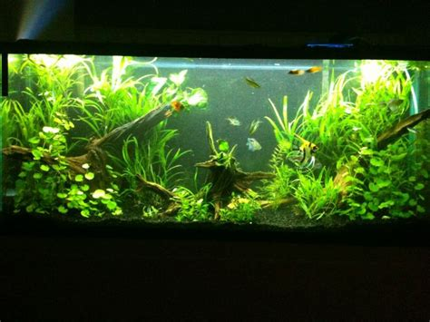 Aquascaping Ideas For Planted Tank by 34 Best Aquariums Images On Aquarium Ideas