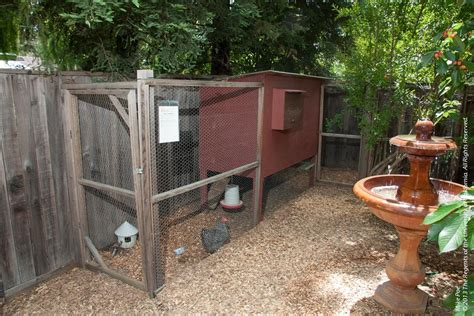 backyard chicken blogs rodent control in and around backyard chicken coops pests in the urban landscape