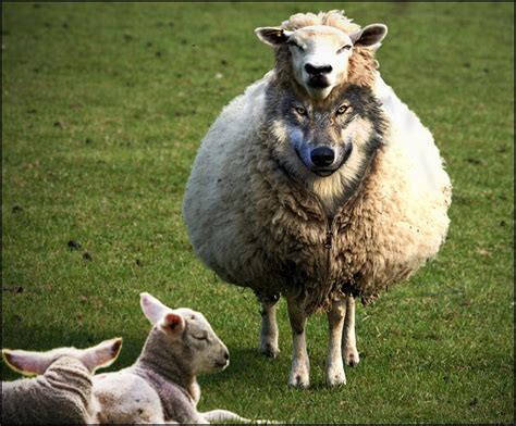 he was a wolf in sheep s clothing 2 volume 2 books was muhammad a false prophet sharia unveiled