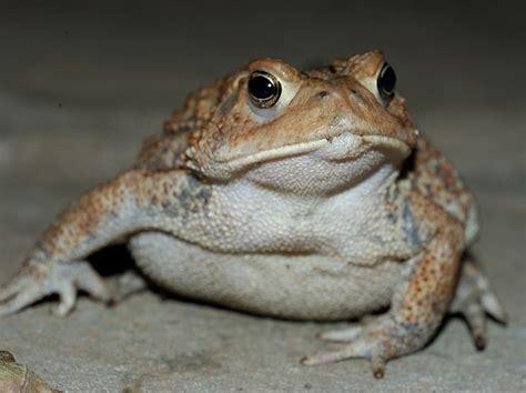 toad comics just another wordpress com site