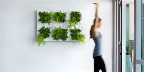 Indoor Living Wall Planter by Indoor Living Wall Planter Easy Vertical Gardening