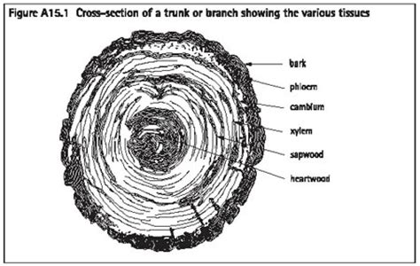 tree cross section diagram district plan proposed hauraki gulf islands section 2006