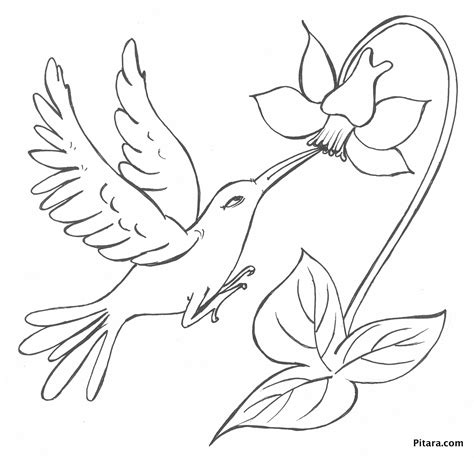 coloring pages of birds and flowers bird with flower coloring page pitara kids network