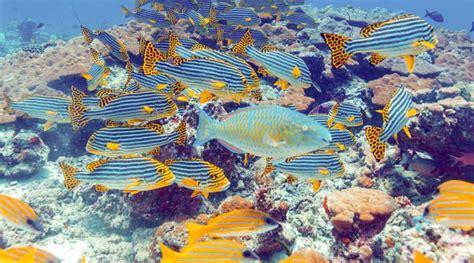 maldive volo piu soggiorno volo e soggiorno 4 stelle al madoogali parti ora per le
