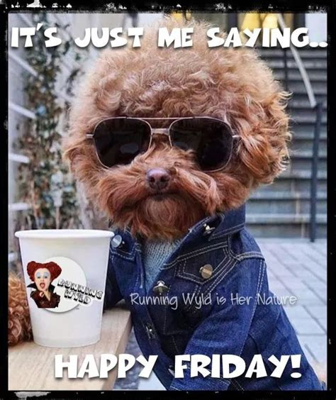 Happy Friday Meme Funny - happy friday vrijdag pinterest happy friday tgif