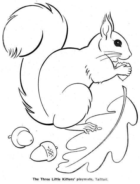 coloring book page template squirrel outline coloring pages