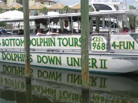 glass bottom boat tours alabama glass bottom dolphin tours dolphins down under the boat
