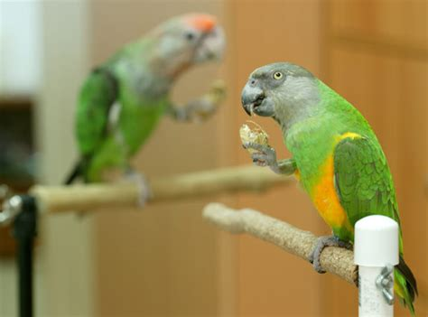 trained parrot blog articles about training parrots tricks