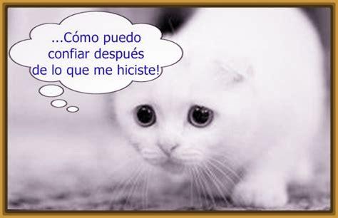 imagenes de gatos tristes con mensajes imagenes de gatos tristes con frases archivos gatitos