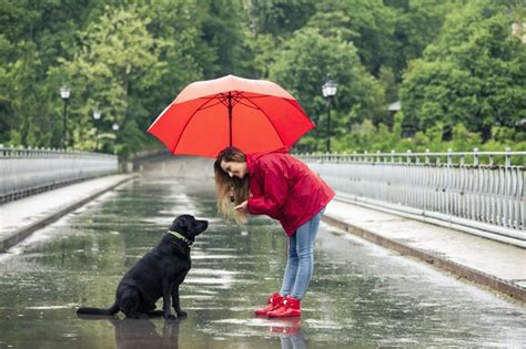 what to do when your dog wont pee or poop in the rain