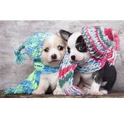 Puppies Dogs Couple Ultra HD 4k Wallpaper  Wallpapers