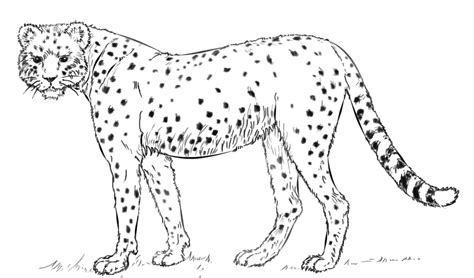 coloring book pages cheetah cheetah coloring pages free printable cheetah coloring pages