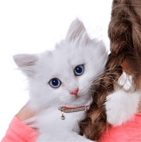 Cat Adoption :: Search by color, age, breed, location and