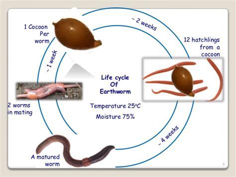 earthworm cycle diagram earthworm cycle diagram schistosoma diagram elsavadorla