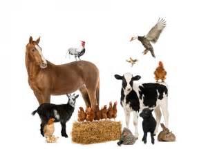 farm animals creative chinese