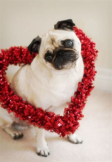 valentines animals 20 most cutest s day dogs home design and interior