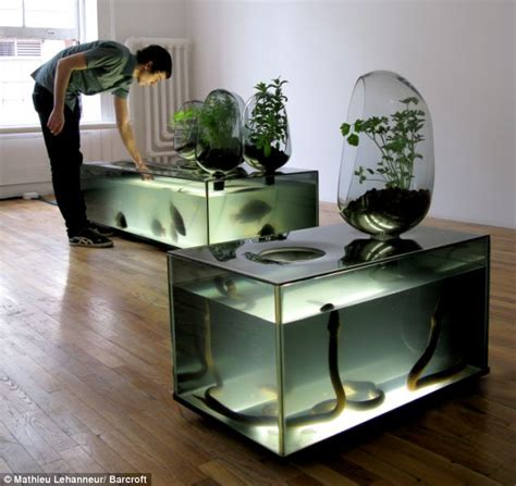 Self Sustaining Garden by The Diy Ecosystem That Lets You Grow Fresh Fish In Your