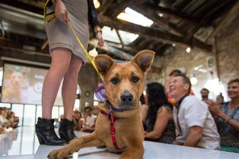 puppy shelters nyc comedian to host rescue the runway in nyc this s
